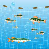 Fishing network and fish river Royalty Free Stock Images