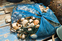 Fishing net with sea shells Royalty Free Stock Photography