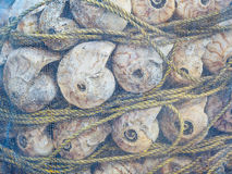 Fishing net and shell close up Stock Photos