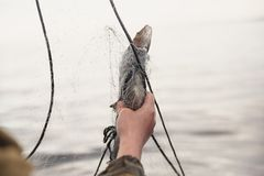 Fishing nets on a boat. Hands take fish out of a net Stock Photo