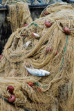 Fishing nets with fish Stock Image