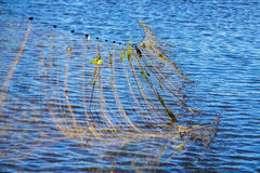 Fishing nets get out of the water. On river Stock Photography