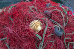 Fishing nets with shell Royalty Free Stock Images