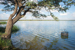 Fishing Pen in Water by Tree. A fishing pen for keeping your catch of the day is securely pegged to the ground in the water by a dam under an acacia tree stock photo