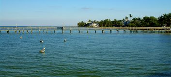 Fishing pier. And pelicans in pine island in gulf of mexico Stock Photography