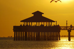 Fishing pier with flying pelican. Gold sunset Stock Images