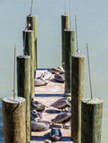 Fishing Poles and Pelicans Royalty Free Stock Images