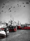 Fishing port. Shot of fishing port located at Hel, Poland (Baltic Sea Royalty Free Stock Photo