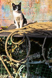 The fishing port cat. Sines fishing port. A cat have a sunbath over old ropes, fish traps and other fishers objetcs royalty free stock images