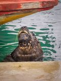 Fishing port and sea lions, city of Mar del Plata, Argentina stock photo