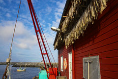 Fishing port. Small fishing port with dried stock fish on Lofoten islands in Norway Stock Images