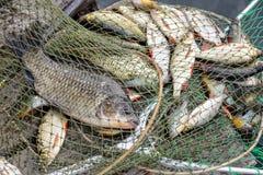 Fishing, raw fish, catch. Stock Photography