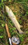 Fishing rod and fish Royalty Free Stock Photo