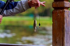 Fishing rod lake fisherman men summer lure sunset water outdoor. Fisherman catches fish Royalty Free Stock Photography