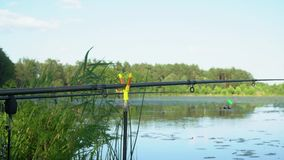Fishing rods on the lake in summer day. Professional fishing rods waiting for bites on water river. Fishing rod on the lake in summer day stock video footage