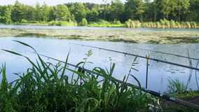 Three professional fishing rods waiting for bites on water river. Fishing rods on the lake in summer day. Fishing rod on the lake in summer day stock video footage