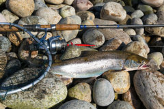 Fishing sea trout Stock Images