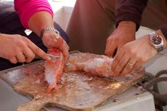 Fishing series - cleaning a fresh fish Royalty Free Stock Image
