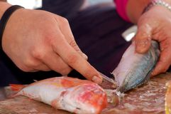 Fishing series - cleaning a fresh fish Royalty Free Stock Images