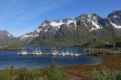 Fishing ships in Sildpollen, Lofoten. Colorful fishing ships in a bay with mountains with snow in the background Royalty Free Stock Image
