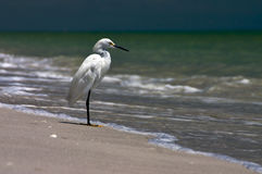 Fishing Shore Bird Royalty Free Stock Photos