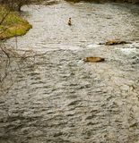 Fishing on the Smith River - 2 royalty free stock photo