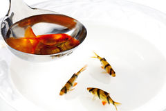Fishing soup Royalty Free Stock Images