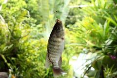 Fishing. Sport fishing skill of Angler Stock Photos