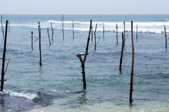 Fishing sri lanka Royalty Free Stock Photo