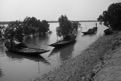 Fishing at Sundarban, India Stock Images