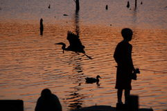 Fishing at Sunset. Fishing in the Park at Sunset Royalty Free Stock Photography