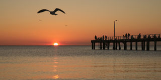 Fishing at sunset and seagulls Royalty Free Stock Photo