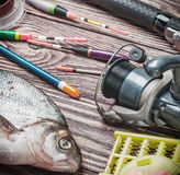Fishing tackle and fished bream Stock Photo