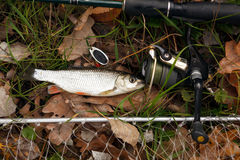 Fishing tackle on wooden surface. Stock Image