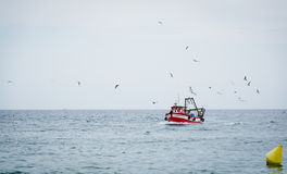 Fishing trawler. Surrounded by seagulls coming home with its catch Royalty Free Stock Images