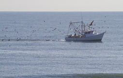 Fishing Trawler and Excited Birds Royalty Free Stock Images