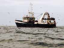Fishing trawler. Off the coast of Mauritania surrounded by a flock of boobby birds Stock Images
