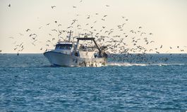 Free Fishing Trawler Returns Home, Surrounded By Seagulls. Stock Image - 163549501