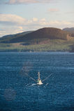 Fishing trawler at sea. In blue water. Sea food vessel carry shrimps Royalty Free Stock Photos