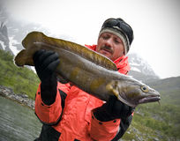 Fishing trophy - torsk Stock Images