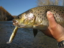 Fishing trout royalty free stock photos