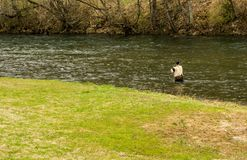 Fishing for Trout on the Smith River royalty free stock photography