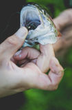 Fishing trouts outdoor activity Stock Images