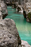 Fishing trouts in pure river soca in canyon gorge, julian alps, slovenia Stock Images