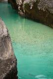 Fishing trouts in pure river soca in canyon gorge, julian alps, slovenia Stock Photo