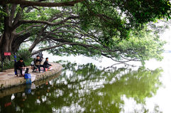 Fishing under the tree Royalty Free Stock Photo