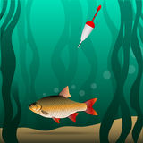 Fishing. Under the water. The fish grabbed the bait and pulls the fishing tackle. River bottom and algae. Vector illustration Stock Photo