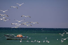 Fishing vessel and the birds. Royalty Free Stock Image