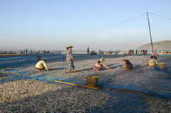 Fishing Village - Ngapali Beach - Myanmar (Burma) Royalty Free Stock Photo