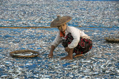 Fishing Village - Ngapali Beach - Myanmar (Burma). Burmese women sorting fish drying in the early morning sun near the fishing village on Ngapali Beach in stock photo